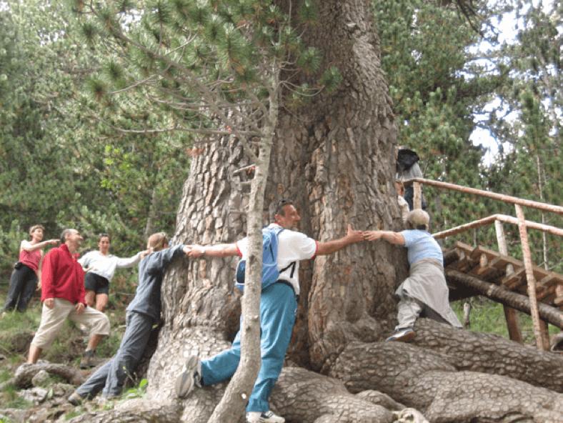 Baikusheva pine in Bansko | Lucky Bansko