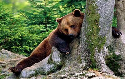 Застрашени видове в парк Белица | Lucky Bansko