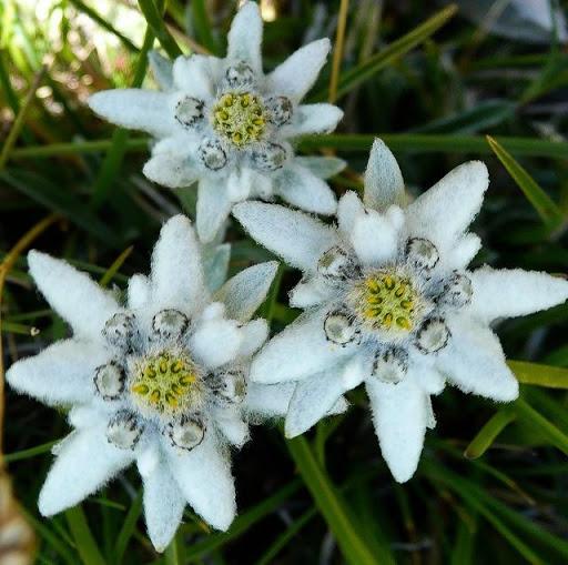 Растителен свят парк Пирин | Lucky Bansko