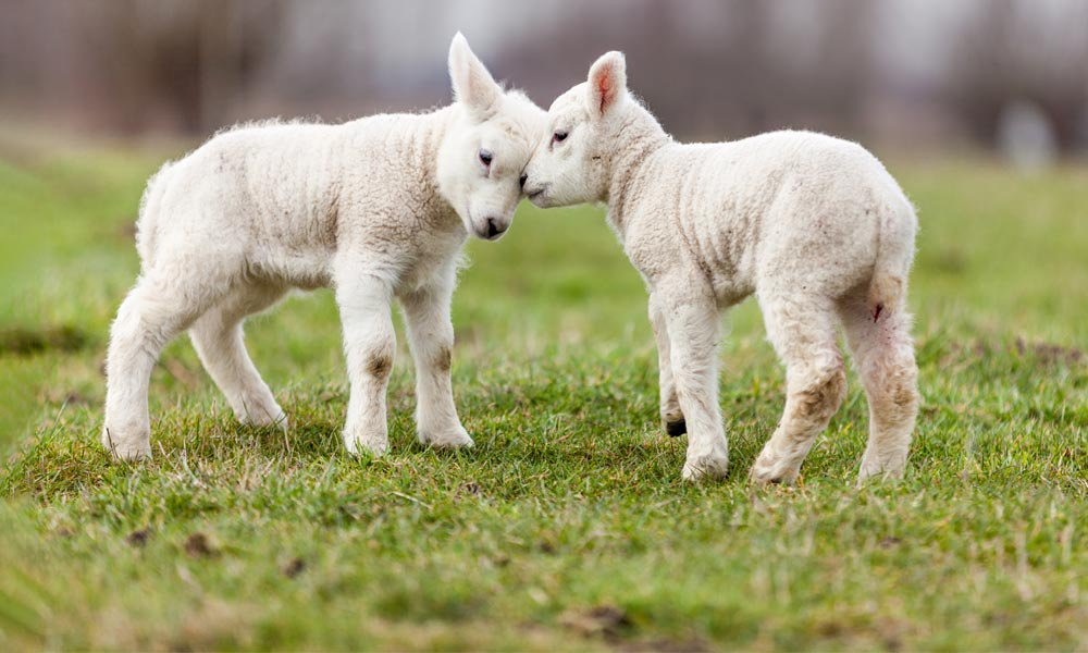 Fauna din Pirin| Lucky Bansko