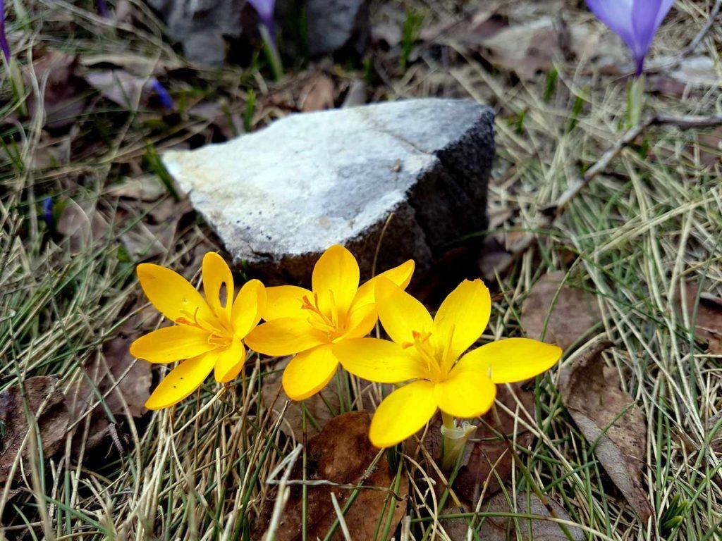 Flora u Pirinu | Lucky Bansko