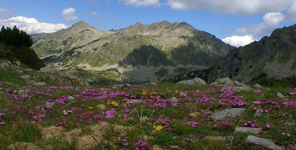 Паркови райони в Пирин планина