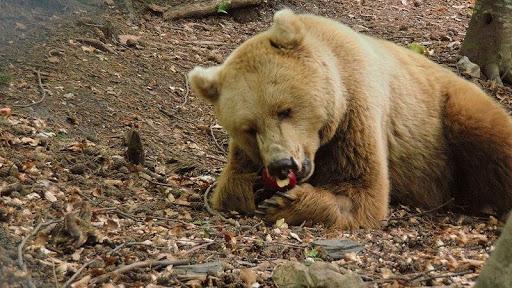 Excursie la Parcul Belitsa | Lucky Bansko