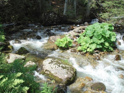 Ο ποταμός Bistritsa στα βουνά του Πιρίν