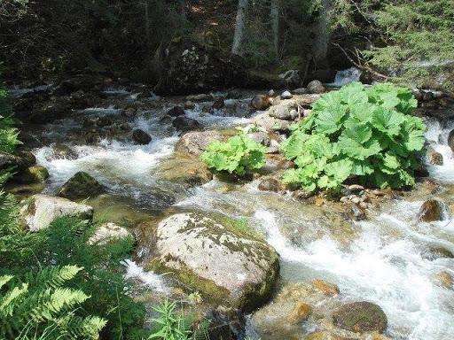 Pirin Dağları'ndaki Bistritsa Nehri