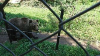 Градът на танцуващите мечки Белица